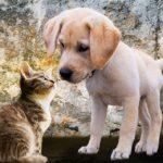 Nasze zwierzaki